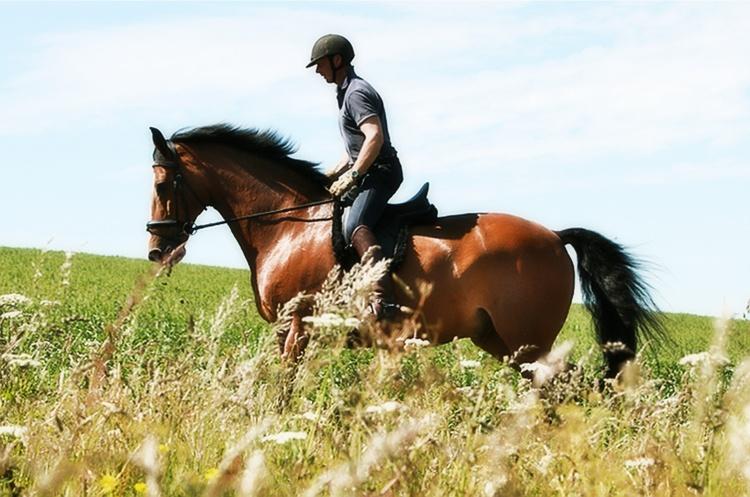 Катание на лошадях простатит дарсонваль при простатите как пользоваться